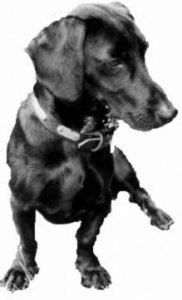 Picture Of Dudley Official Doggerel of the U.S. National Poetry team.