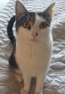 Image Of Tache The Cat By Owner And Author K.S.R. (Karen) Burns