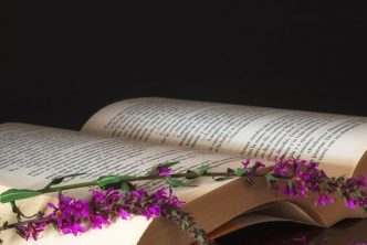 Image of an open book showing words, with a small purple sprig led across the pages - used for the meme Wondrous Words Wednesday